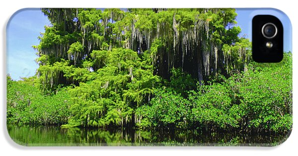 Crocodile iPhone 5s Case - Florida Swamps by Carey Chen