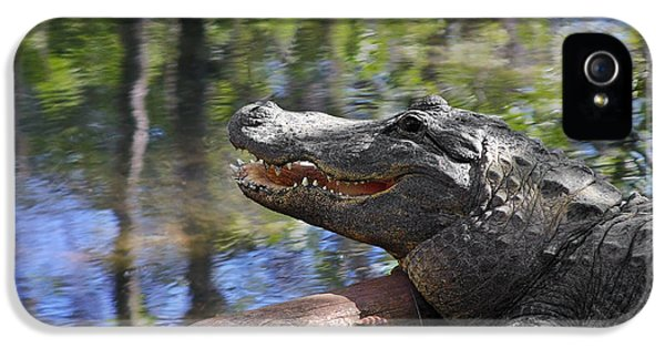 Florida - Where The Alligator Smiles IPhone 5s Case by Christine Till