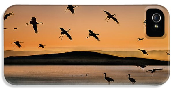 Crane iPhone 5s Case - Fly-in At Sunset by Shenshen Dou