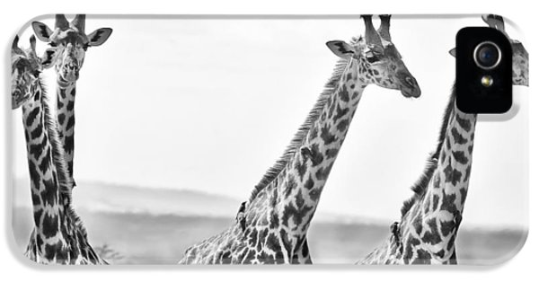 Four Giraffes IPhone 5s Case by Adam Romanowicz
