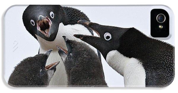 Four Penguins IPhone 5s Case by Carol Walker