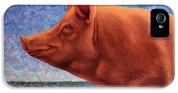 Pig iPhone 5s Case - Free Range Pig by James W Johnson