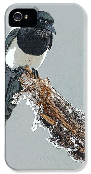 Frosted Magpie- Abstract IPhone 5s Case