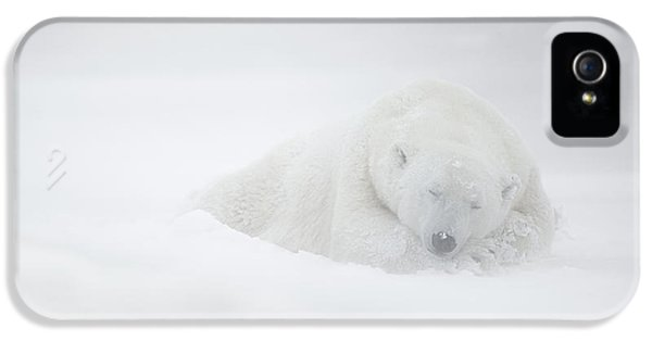 Polar Bear iPhone 5s Case - Frozen Dreams by Marco Pozzi