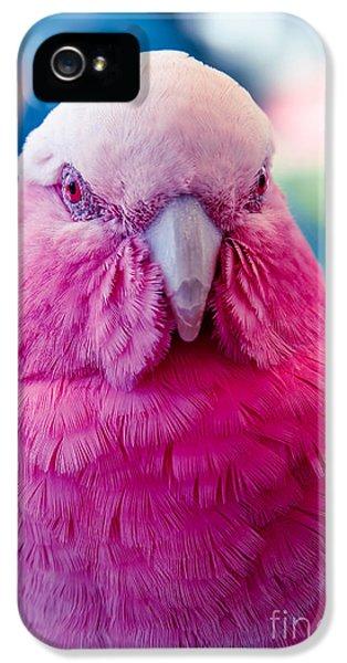 Galah - Eolophus Roseicapilla - Pink And Grey - Roseate Cockatoo Maui Hawaii IPhone 5s Case