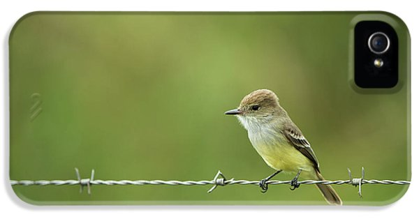 Flycatcher iPhone 5s Case - Galapagos Flycatcher (myiarchus by Pete Oxford