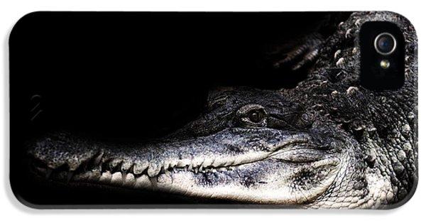 Crocodile iPhone 5s Case - Gator by Martin Newman