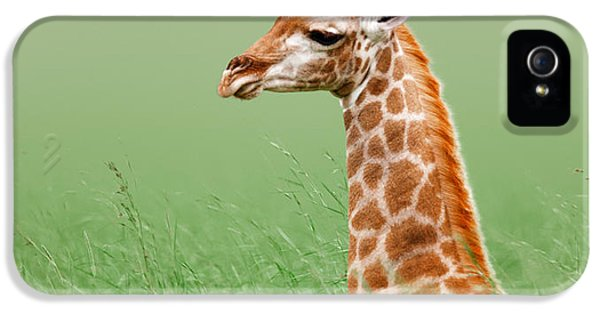Giraffe Lying In Grass IPhone 5s Case by Johan Swanepoel