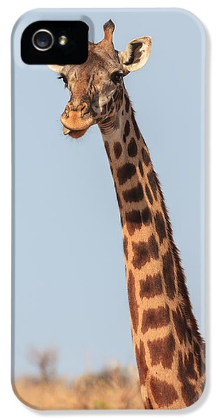 Giraffe Tongue IPhone 5s Case by Adam Romanowicz