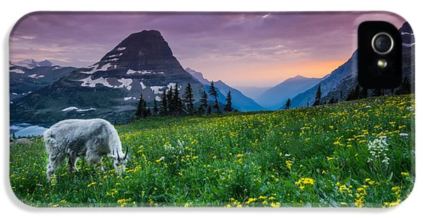 Goat iPhone 5s Case - Glacier National Park 4 by Larry Marshall