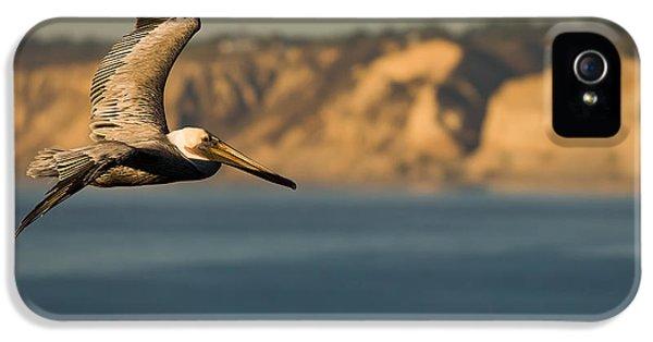 Gliding Pelican IPhone 5s Case