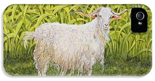 Goat IPhone 5s Case by Ditz