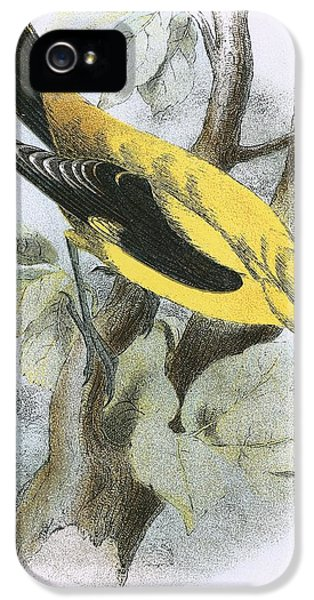 Golden Oriole IPhone 5s Case by English School