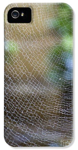 Far North Queensland iPhone 5s Case - Golden Silk Orb Weaver's Web Design by Kerryn Madsen-Pietsch