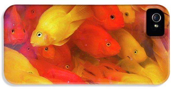 Goldfish At Goldfish Market, Hong Kong IPhone 5s Case by Peter Adams