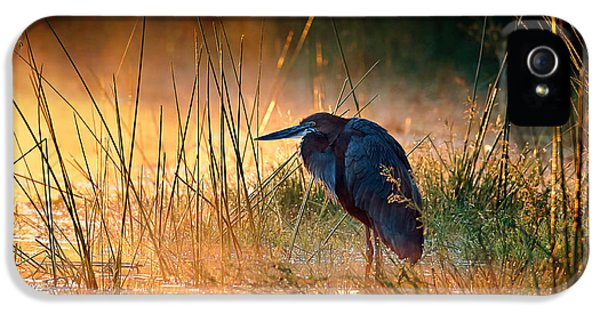 Heron iPhone 5s Case - Goliath Heron With Sunrise Over Misty River by Johan Swanepoel