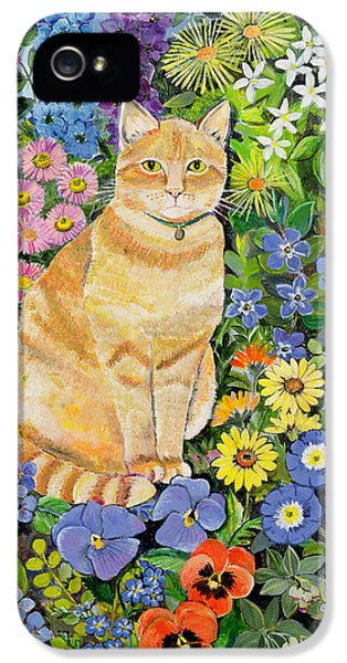 Garden iPhone 5s Case - Gordon S Cat by Hilary Jones