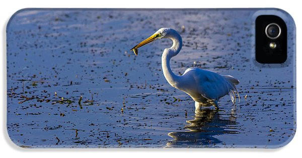 Sandpiper iPhone 5s Case - Gotcha by Marvin Spates
