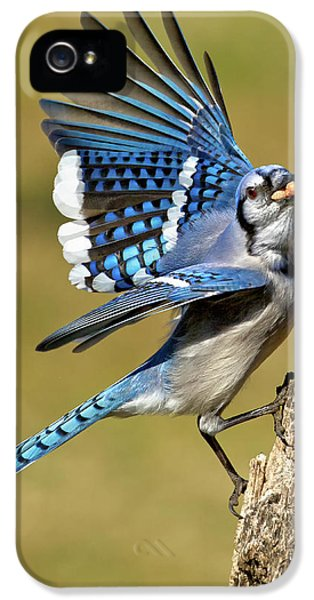 Bluejay iPhone 5s Case - Gotta Go by Bill Wakeley