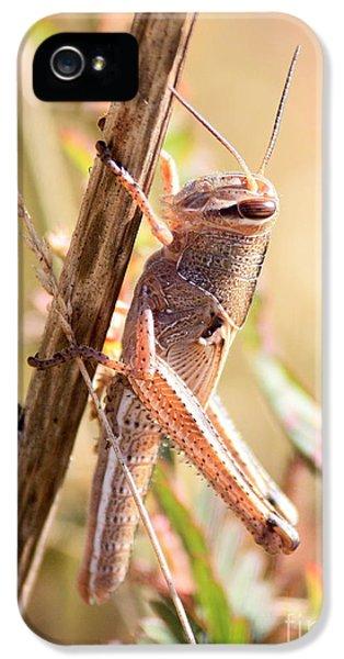 Grasshopper In The Marsh IPhone 5s Case by Carol Groenen