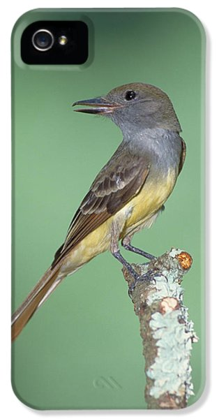 Great Crested Flycatcher Myiarchus IPhone 5s Case