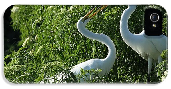 Great White Egret Lovers IPhone 5s Case by Sabrina L Ryan
