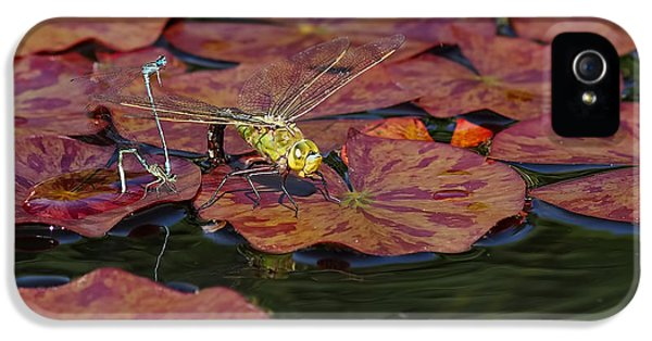 Green Darner Dragonfly With Friends IPhone 5s Case