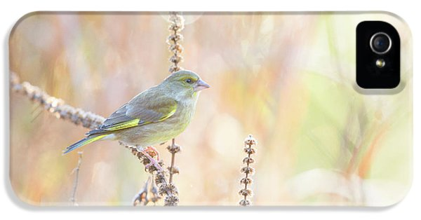 Pastel Colors iPhone 5s Case - Green Finch by Erik Willaert