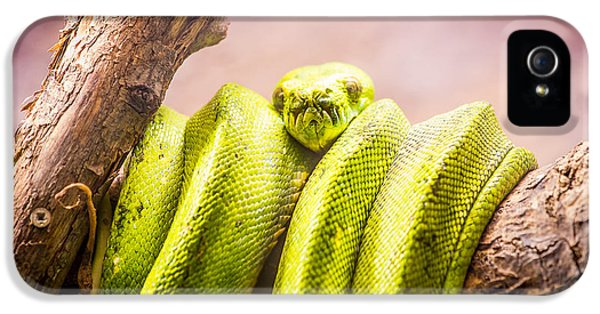 Green Tree Python IPhone 5s Case by Pati Photography