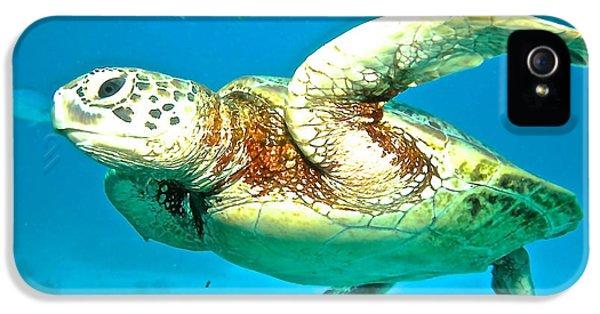 Far North Queensland iPhone 5s Case - Green Turtle by Casey Herbert