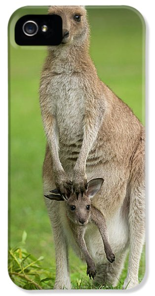 Grey Kangaroo And Joey  IPhone 5s Case