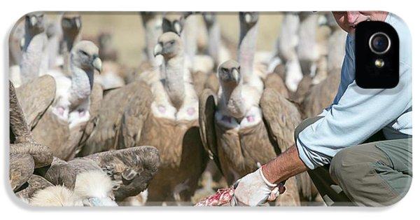 Griffon iPhone 5s Case - Griffon Vulture Conservation by Nicolas Reusens