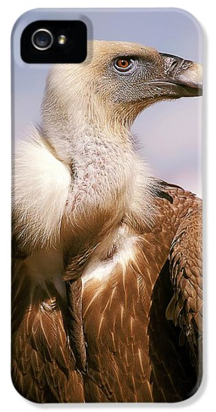 Griffon Vulture (gyps Fulvus) IPhone 5s Case by Photostock-israel