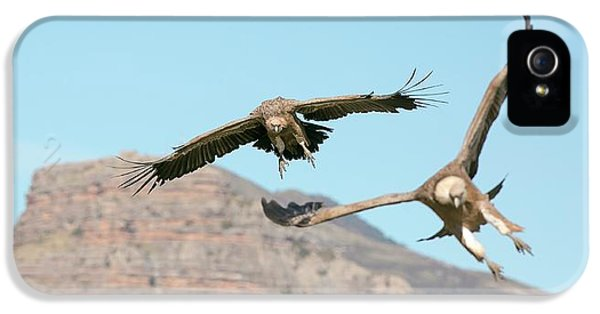 Griffon iPhone 5s Case - Griffon Vultures Flying by Nicolas Reusens