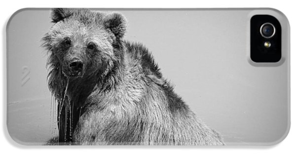 Grizzly Bear Bath Time IPhone 5s Case by Karen Shackles