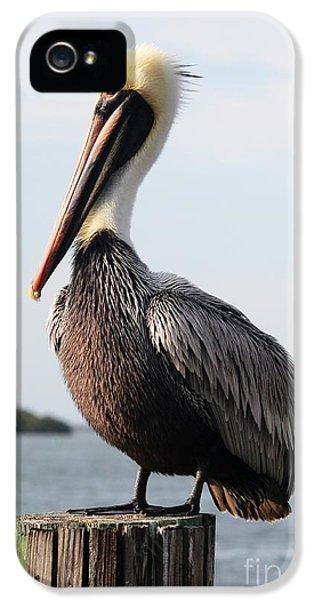 Handsome Brown Pelican IPhone 5s Case by Carol Groenen