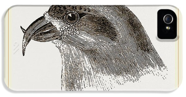 Crossbill iPhone 5s Case - Head Of Crossbill by Litz Collection