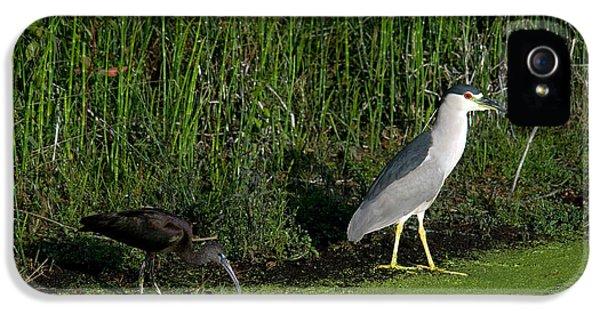 Heron And Ibis IPhone 5s Case