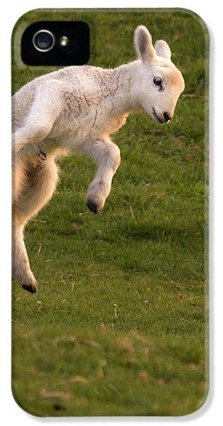 Sheep iPhone 5s Case - Hop Hop Hop by Angel Ciesniarska