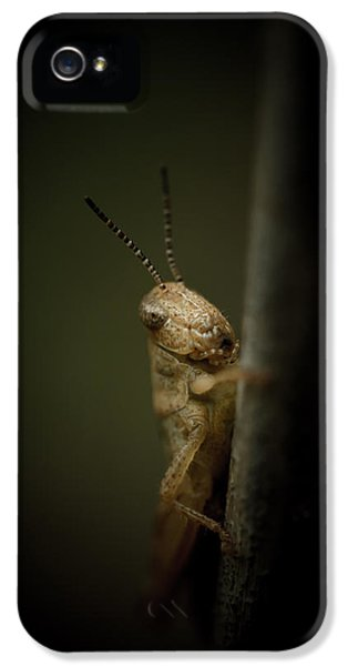 Grasshopper iPhone 5s Case - hop by Shane Holsclaw