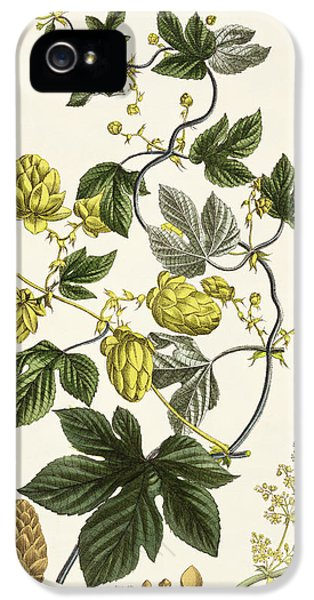 Beer iPhone 5s Case - Hop Vine From The Young Landsman by Matthias Trentsensky