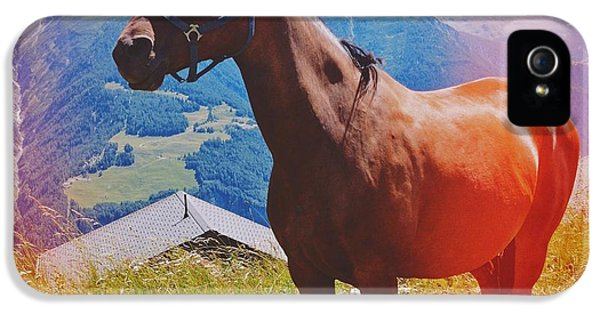 Light iPhone 5s Case - Horse In The Alps by Matthias Hauser