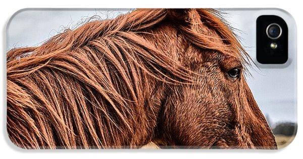 Horsey Horsey IPhone 5s Case by John Farnan