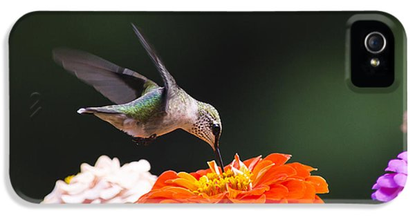 Hummingbird In Flight With Orange Zinnia Flower IPhone 5s Case