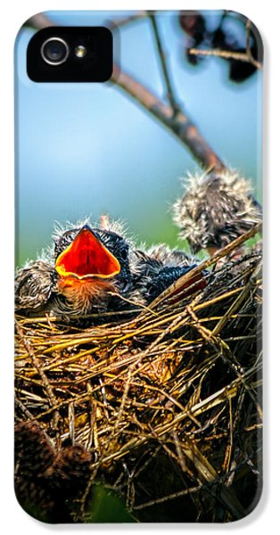 Hungry Tree Swallow Fledgling In Nest IPhone 5s Case