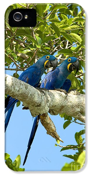 Hyacinth Macaws Brazil IPhone 5s Case by Gregory G Dimijian MD