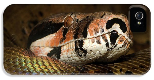 Hypo Colombian Boa IPhone 5s Case by Nigel Downer