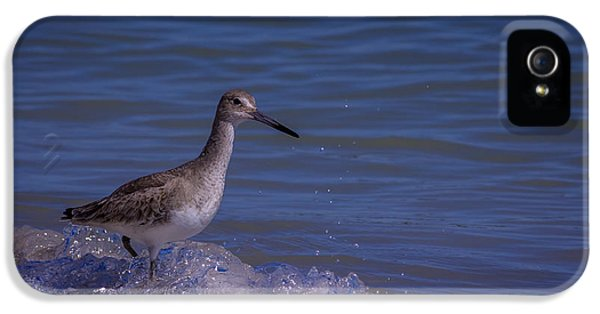 Sandpiper iPhone 5s Case - I Can Make It by Marvin Spates