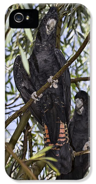 I Say Old Chap IPhone 5s Case by Douglas Barnard