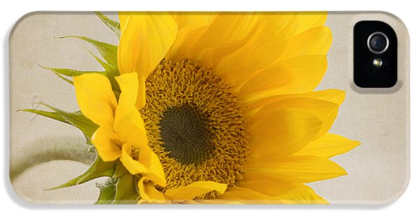 Sunflower iPhone 5s Case - I See Sunshine by Kim Hojnacki